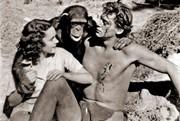 E' morta Cheetah, la fedele scimmietta di Tarzan