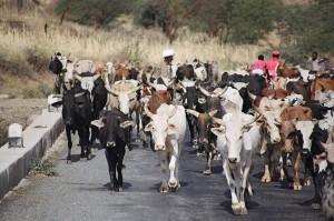 Traffico fra Keren e Massawa