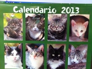 reagalo natale: calendario gatti