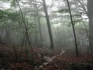 d'annunzio la pioggia nel pineto