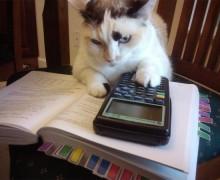 Gatto-matematica