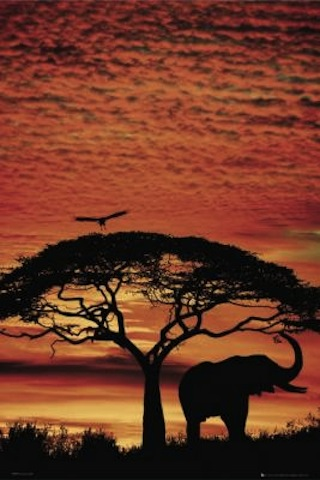 20101179334_Maxi-Posters-Africa-Sunset---Elephant-73218