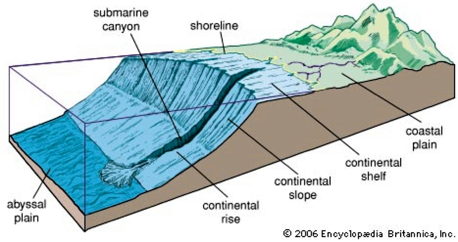 Canyon sottomarino in prossimità della foce di un fiume: frane sottomarine possono scendere lungo il canyon e lungo la scarpata continentale trasportando così sedimenti (e nutrimenti) verso la piana abissale.