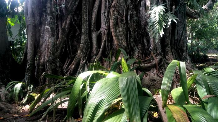 Vegetazione a Mariquita [foto: G.P. Miscione]