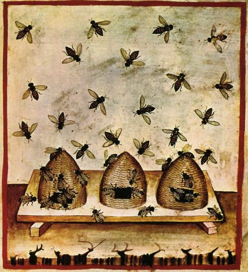 Il miele. Tacuinum sanitatis, Biblioteca casanatense, Roma