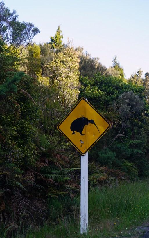 Attenti al kiwi