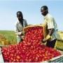 lavoro agricolo immigrati