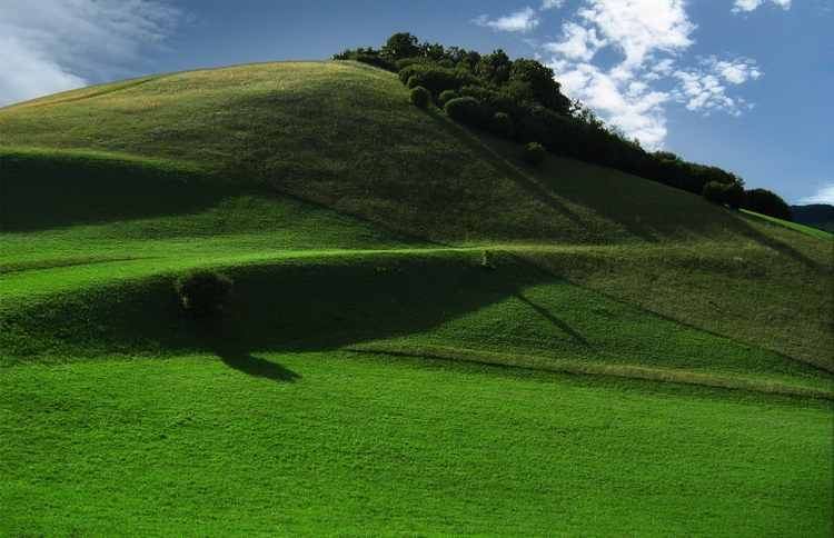 meadow-93952_960_720