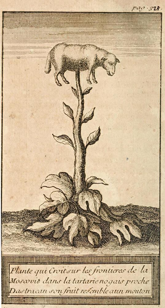 Pecora vegetale tartaa