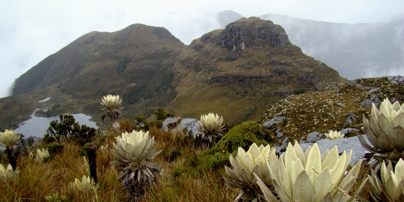 I páramos sono ecosistemi di montagna andini che  si ubicano da altitudini di circa 2900 m s.l.m. fino alla linea di nevi perpetue (5000 m s.l.m.) e sono particolarmente diffusi in Colombia.
