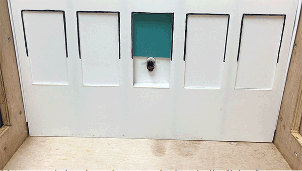 Un'ape entra nel foro segnalato dal colore ambiguo.   [immagine: Clint J. Perry]