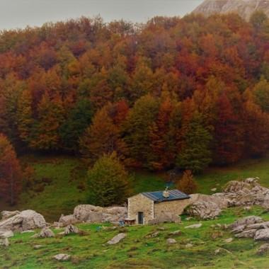 Colori autunnali delle foreste secolari di faggio. Foto: Valeria De Simone