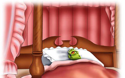rana a letto