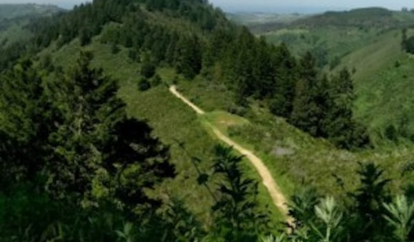 Purisima-Creek-Redwoods-North-Ridge-Trail