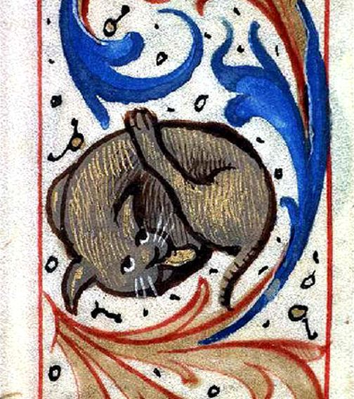 Gatto che fa pulizia, Miniatura medievale